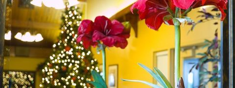 13 Best Christmas Plants Winter Flowers And Plants For