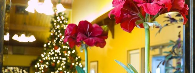 13 best christmas plants winter flowers and plants for the holidays