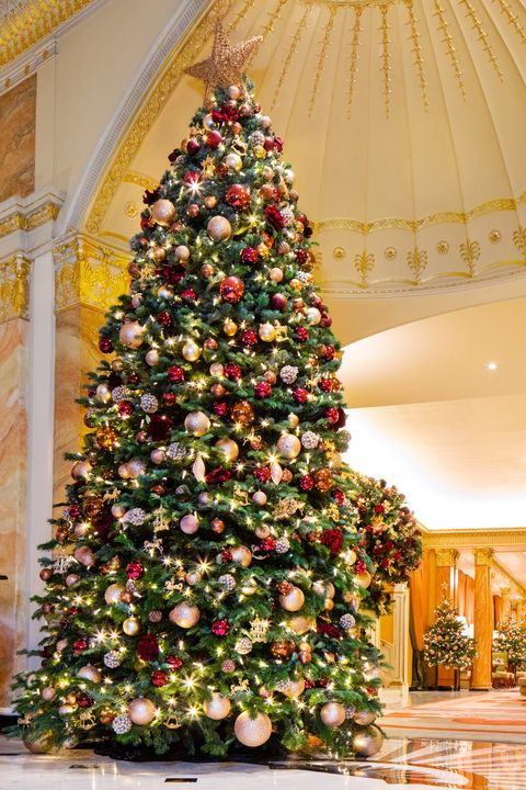 Christmas Trees Images.London S Best Christmas Trees 2018