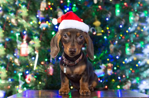 Sainsbury's Announces A Christmas Pop-Up Restaurant For Dogs And It Sounds Adorable