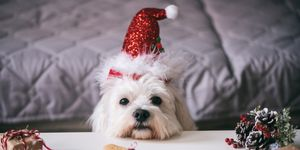 Sainsbury's mince pies for dogs