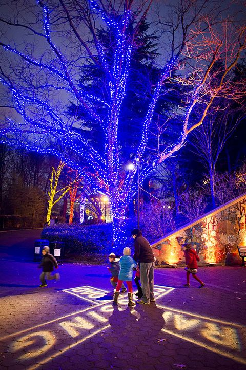 christmas light displays smithsonian national zoo