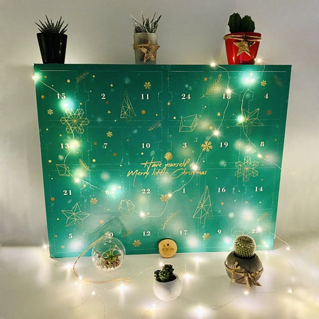 christmas plant advent calendar