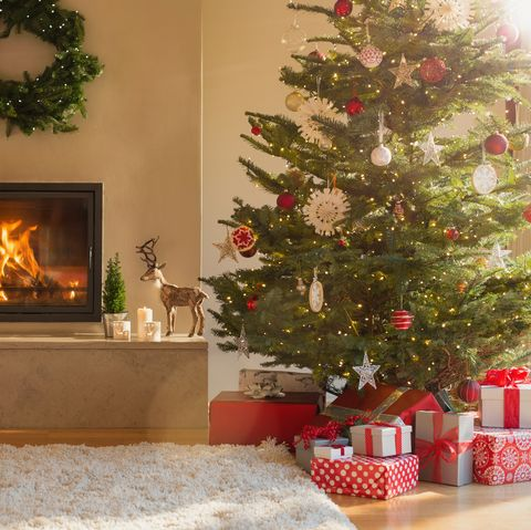How to look after your Christmas tree