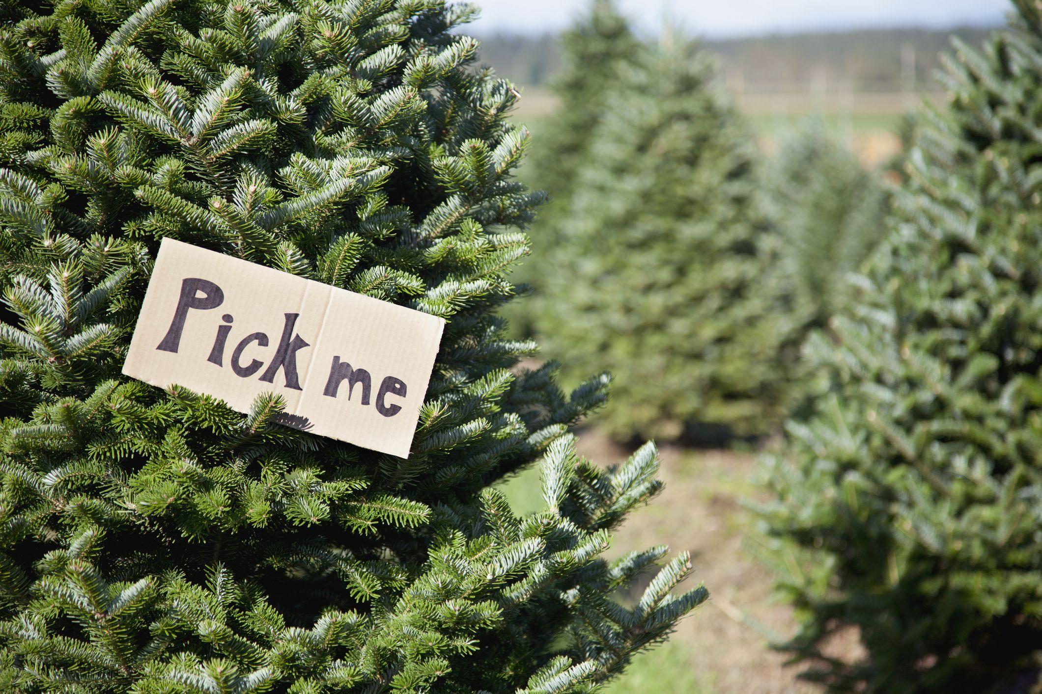 Christmas Tree Lots Near Me.50 Best Christmas Tree Farms In America Christmas Tree