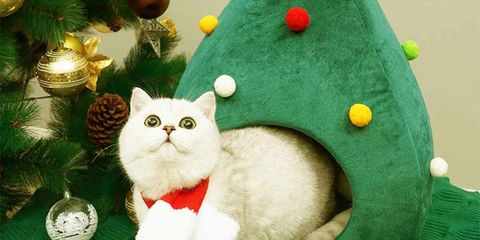 Cat, Felidae, Small to medium-sized cats, Christmas ornament, Christmas, Whiskers, Christmas tree, Carnivore, Christmas decoration,