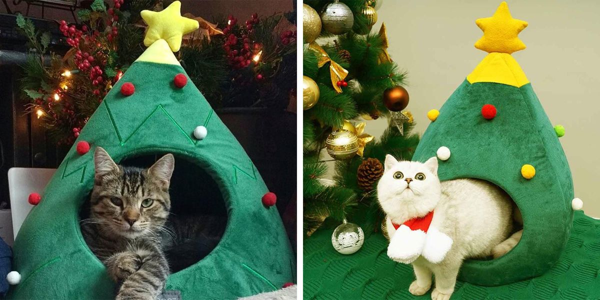 Cat Christmas.This Christmas Tree Cat Bed Guarantees That Your Pet Is Super Festive This Season