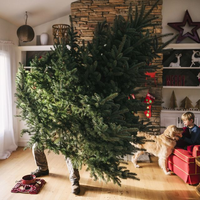 man setting up a christmas tree in the living room with son and dog sitting on a couch