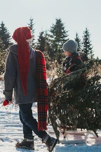 christmas tree farm activities