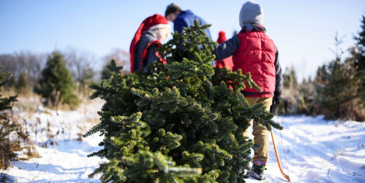 Christmas Tree Farms Near Me.Christmas Tree Farms Near Me 30 Best Christmas Tree Farms In America