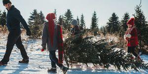 christmas tree farm near me family trip