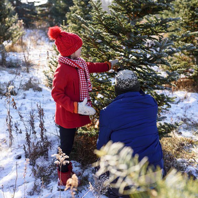 Christmas Tree Near Me.Christmas Tree Farms Near Me 25 Best Christmas Tree Farms