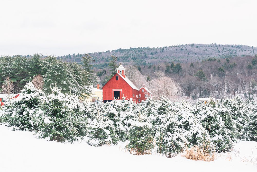 20 of the Best Christmas Tree Farms to Visit This Holiday Season