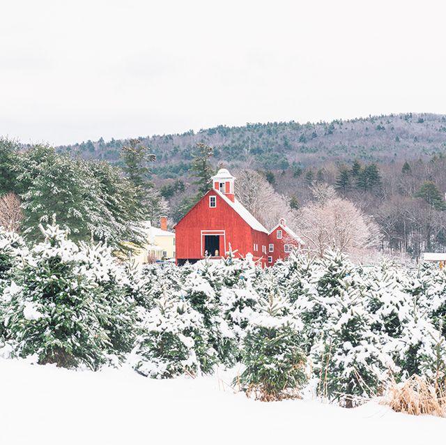 Christmas Tree Farms Near Me - 30 Best Christmas Tree Farms in America