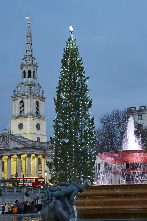 christmas facts -Christmas tree in Trafalger Square at dusk