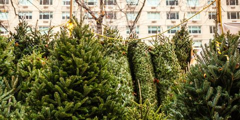 amazon is selling real 7 foot christmas trees this year - Christmas Tree Amazon