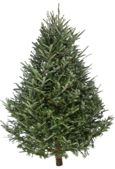christmas tree delivery services christmas trees now