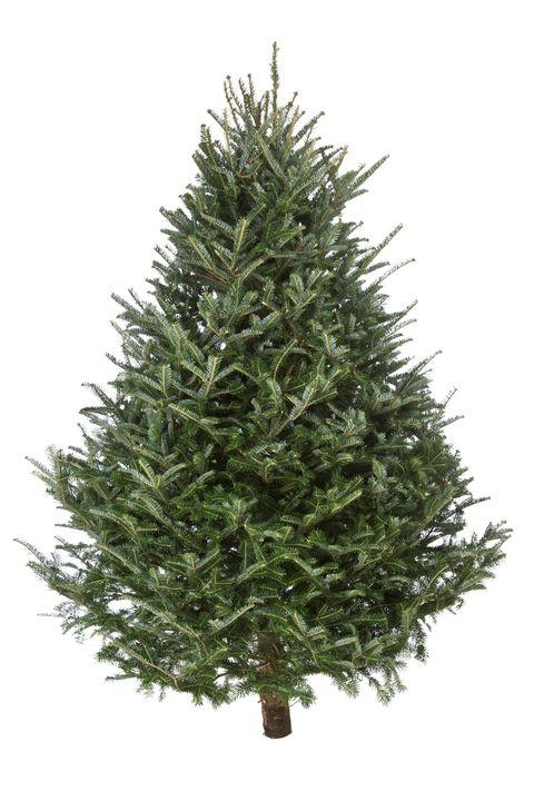 christmas tree real fraser fir - Real Christmas Tree Decorated