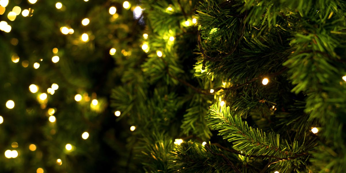 Real Christmas Tree Buying Guide