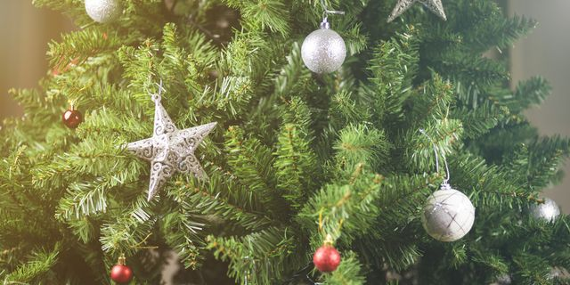 How Long Does It Take To Grow A Christmas Tree.How To Make Christmas Trees Last Longer Christmas Tree Guide