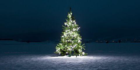 Tree, Christmas tree, Blue, Sky, Plant, Winter, Woody plant, Water, Christmas decoration, Evergreen,