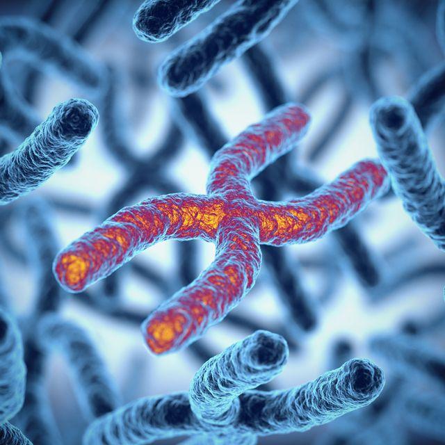 chromosome 3d rendering illustration