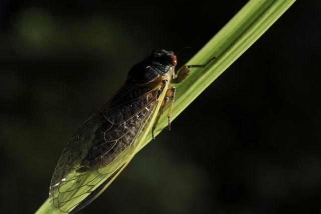 how to survive cicada season, cicada brood emerging 2021, 2021 cicadas, how to deal with cicadas in your yard, how to deal with cicada noise