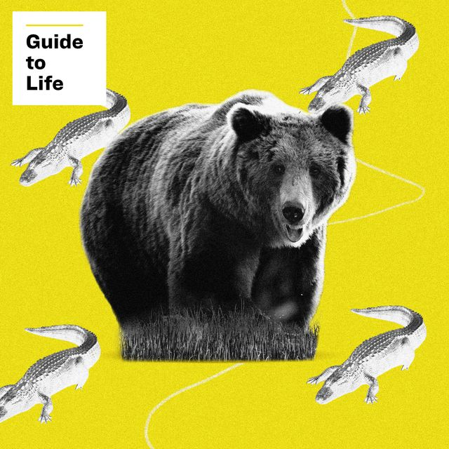 bear and alligator guide to life