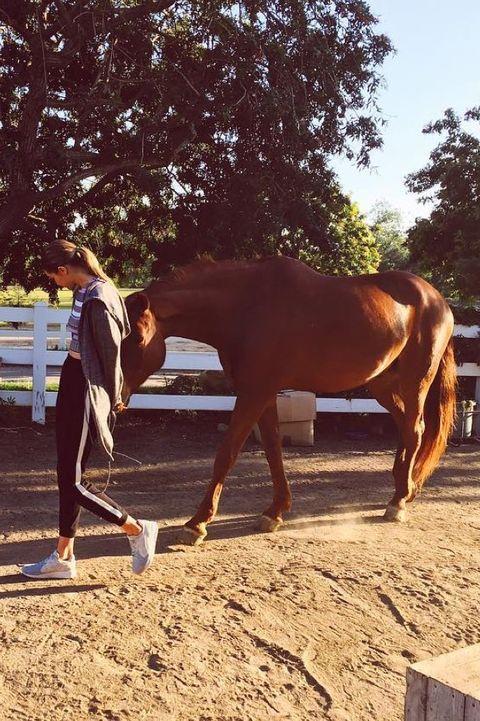 Horse, Mammal, Mare, Sky, Tree, Sorrel, Stallion, Ranch, Livestock, Fence,