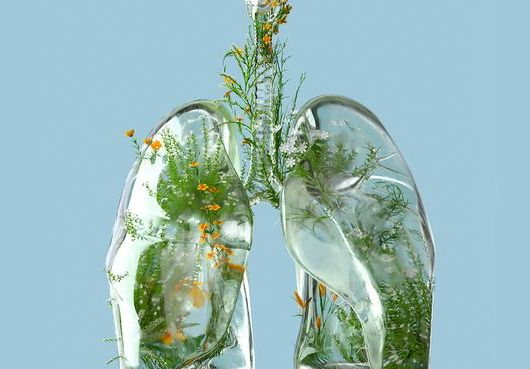 digital generated image of lungs made out of frosted glass and filled with plants and flowers on blue background