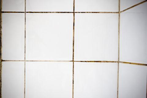 home repair   bathroom mold