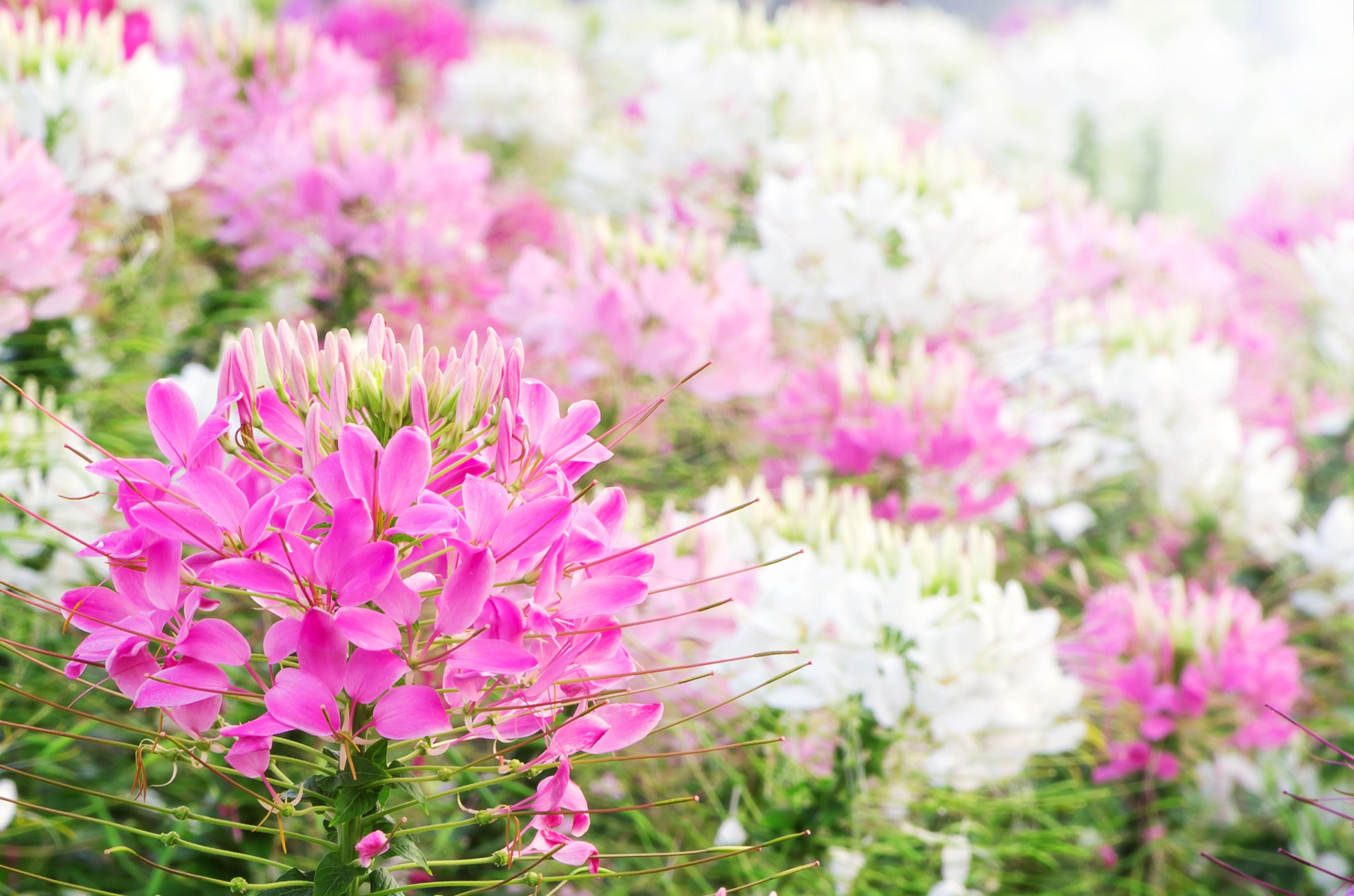 30 Best Summer Flowers Beautiful