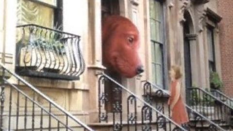 """""""clifford the big red dog"""""""