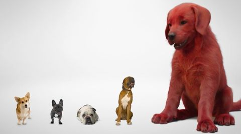 Clifford the Big Red Dog is back in first look at new movie