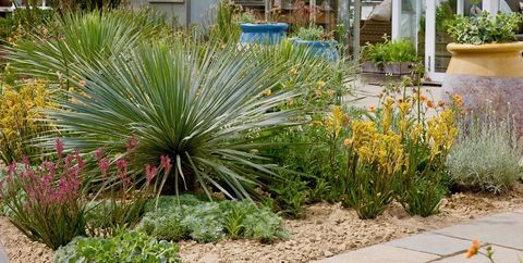 Climate change garden photo
