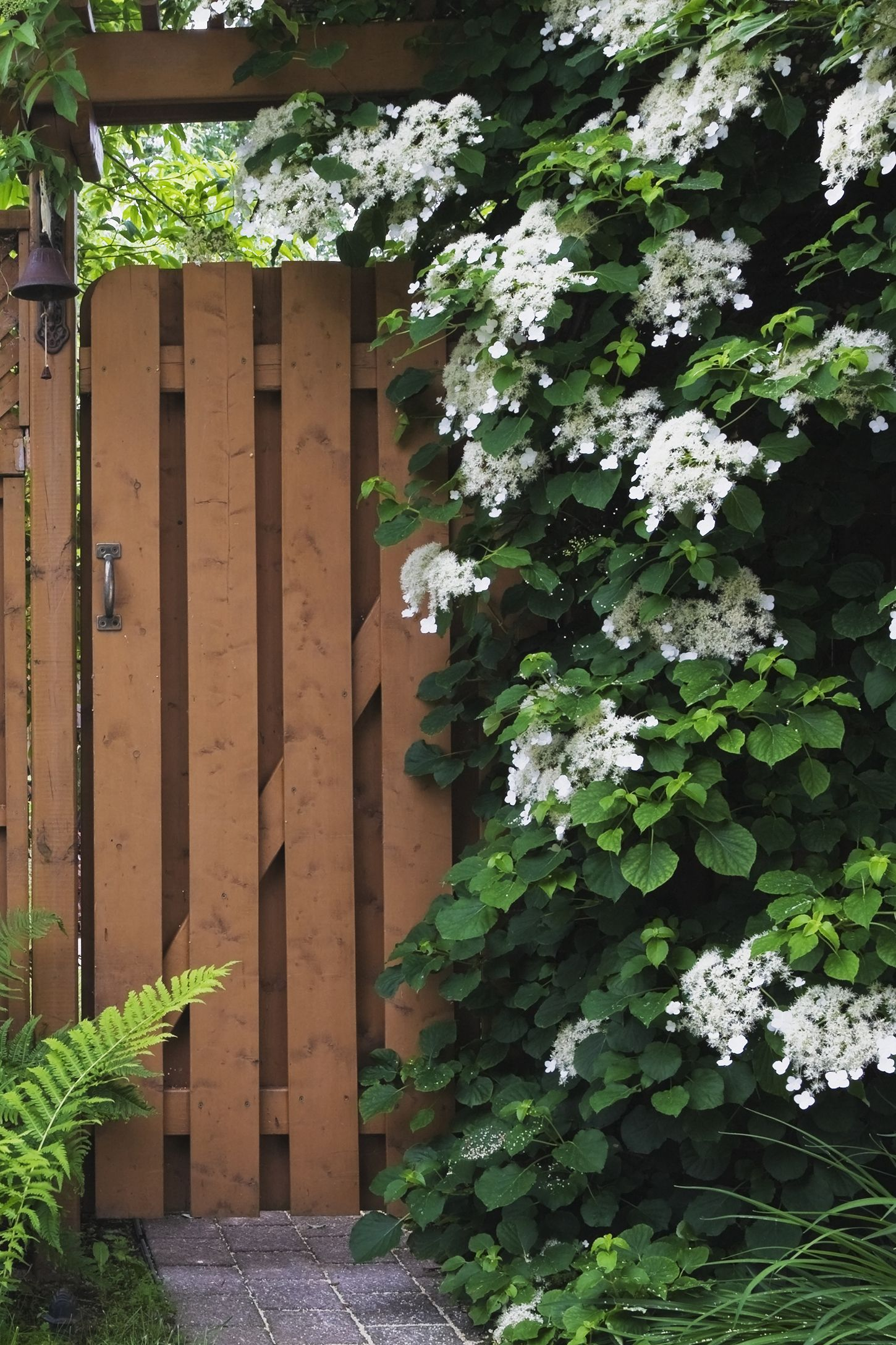 12 Fast Growing Flowering Vines Best Wall Climbing Vines To Plant