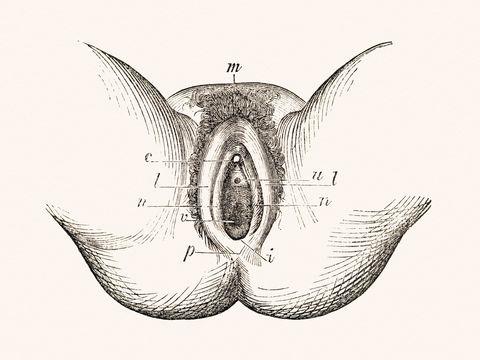 Clit pic and Clitoris Pics
