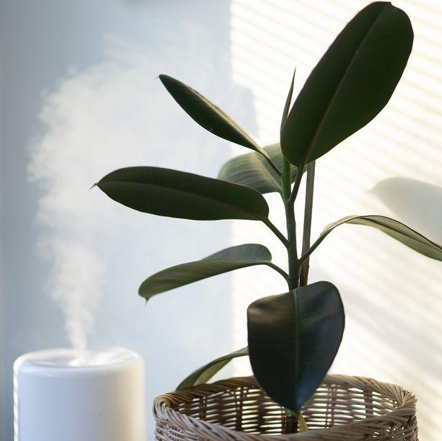 een luchtreiniger naast een plant