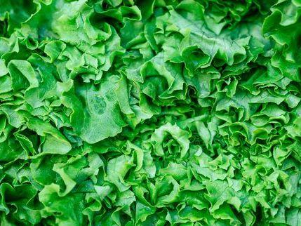 close up full frame shot of lettuce salad