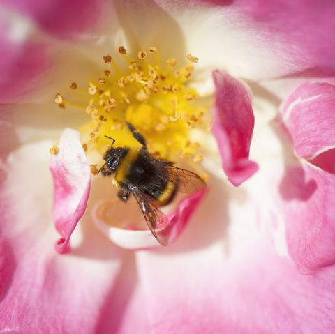 Honeybees Are Dying Due to the Almond Industry