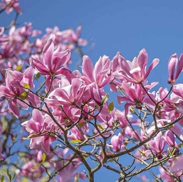 8 best plants for an anti allergy garden