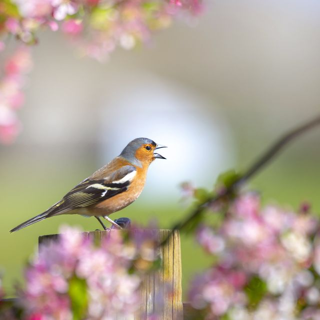 natural sounds are good for our health, including birdsong for stress and water for positivity