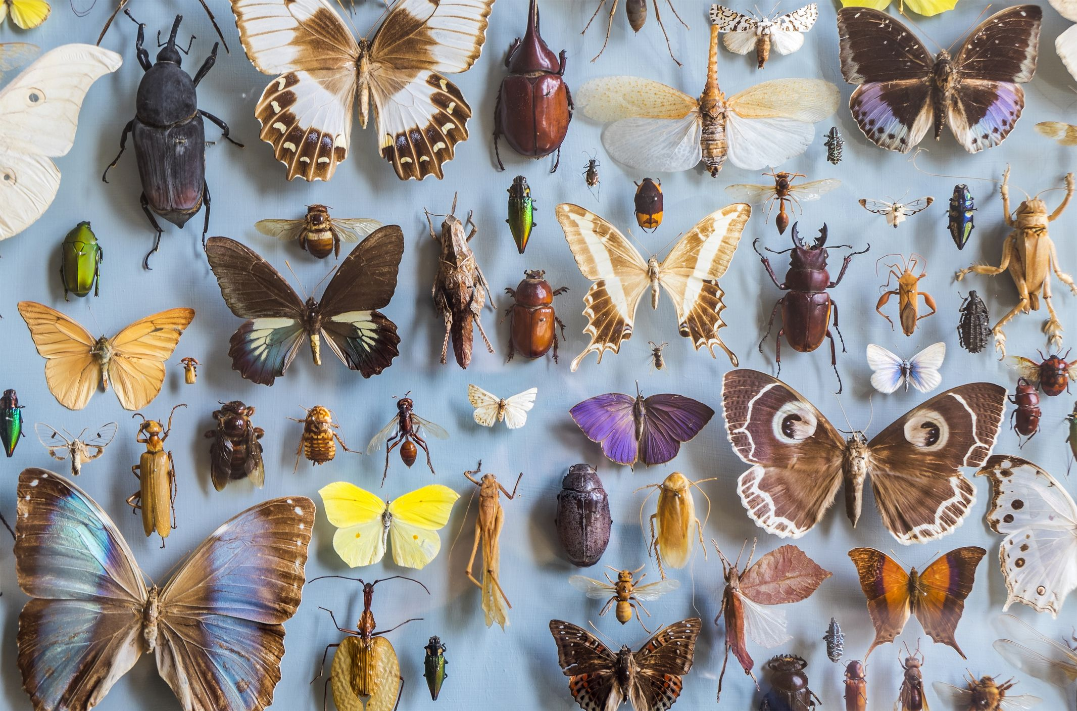 400,000 Insect Species Face Extinction