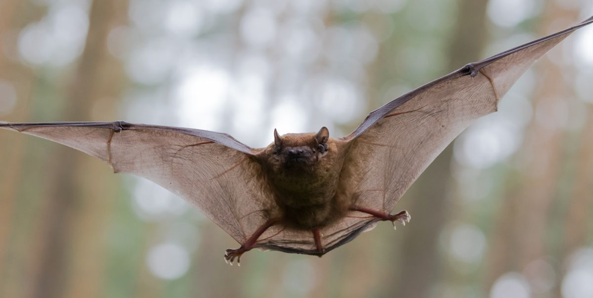 How the Novel Coronavirus Originated in Bats, and Why That's Actually Pretty Common