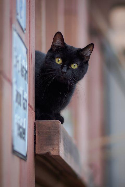 Raven black cat names