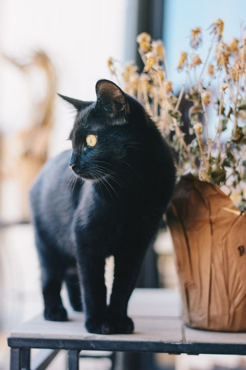 Jinx black cat names