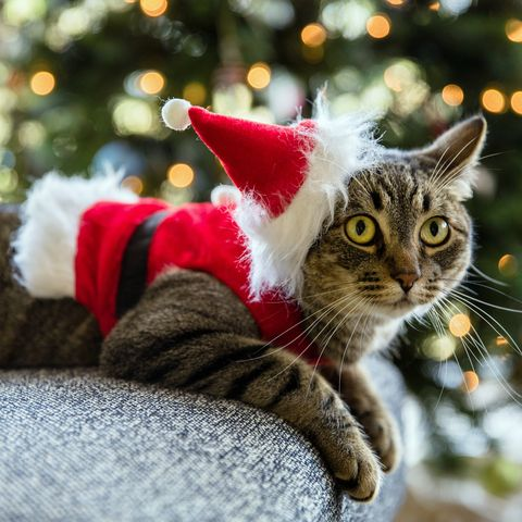 Close-Up Of Cat Wearing Santa Hat While Lying On Sofa