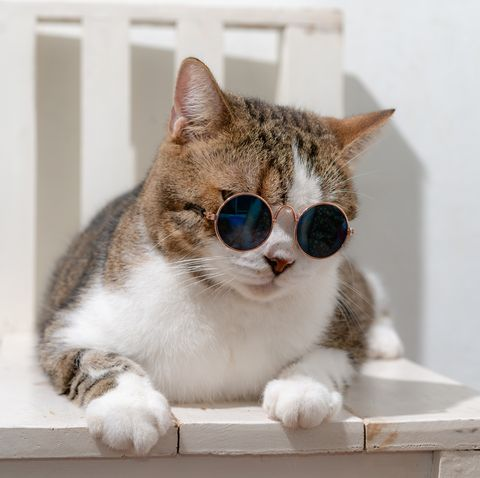 Close-Up Of Cat Wearing Sunglasses While Sitting Chair