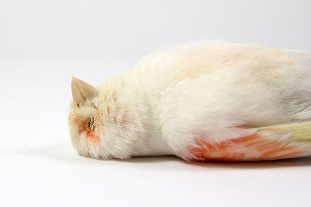 close up of dead bird
