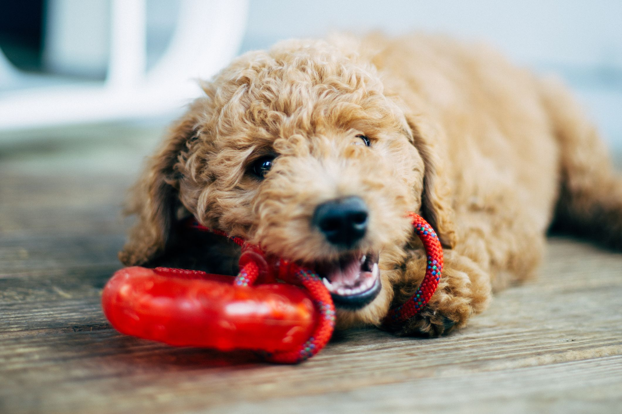 15 indestructible dog toys for aggressive chewers